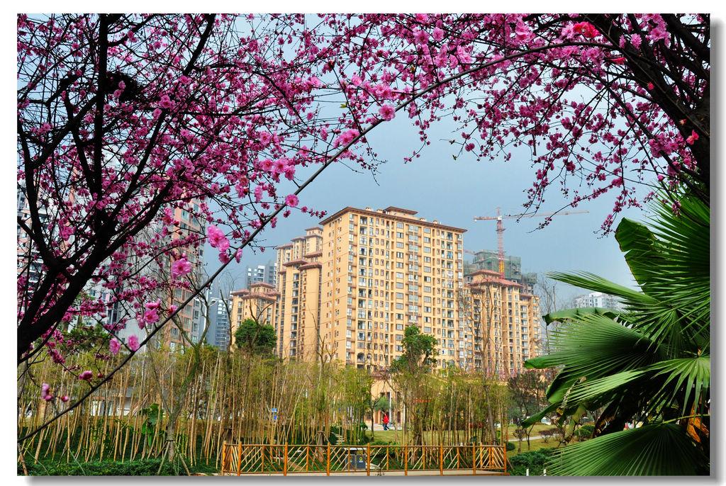 《城市春来花枝梢》张维影摄.jpg