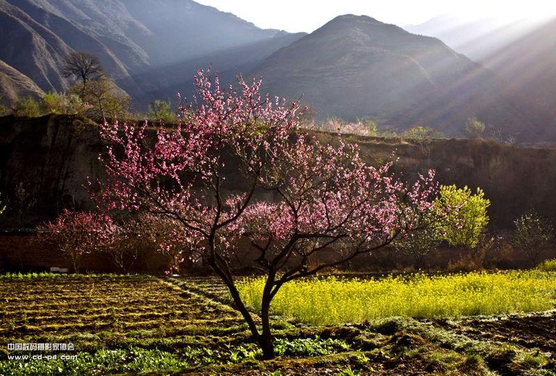 """春天的早晨 - 第三届""""金鹤奖""""全国数码摄影大赛征稿"""
