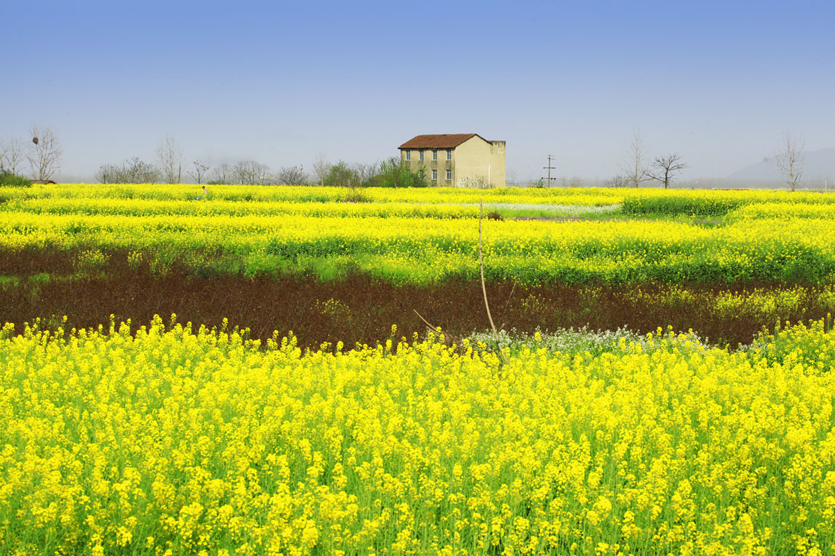 花海田园图片