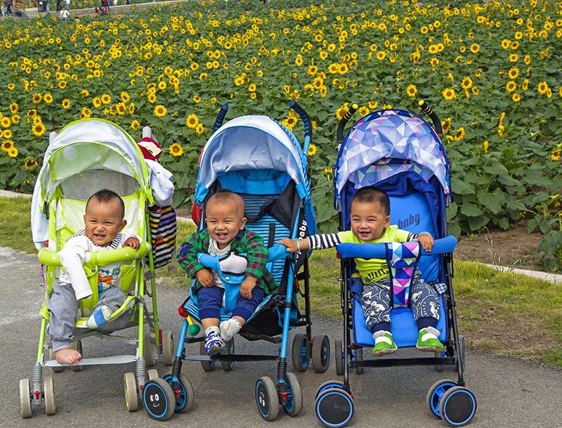 童年里的金色葵园  建荣@视觉.jpg