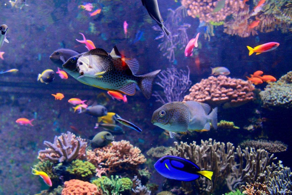 多彩的海底世界---抓拍