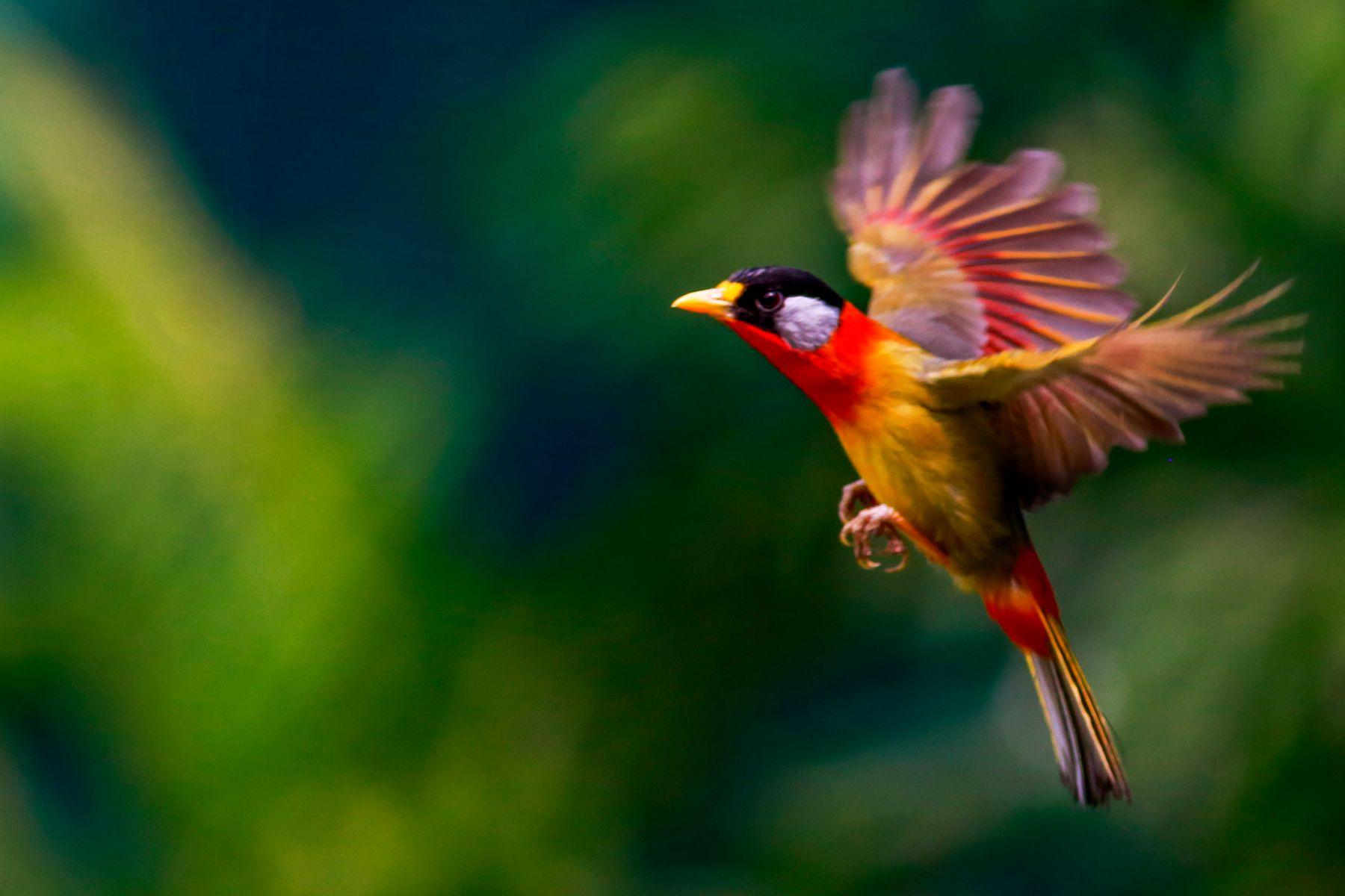 飞翔的小鸟