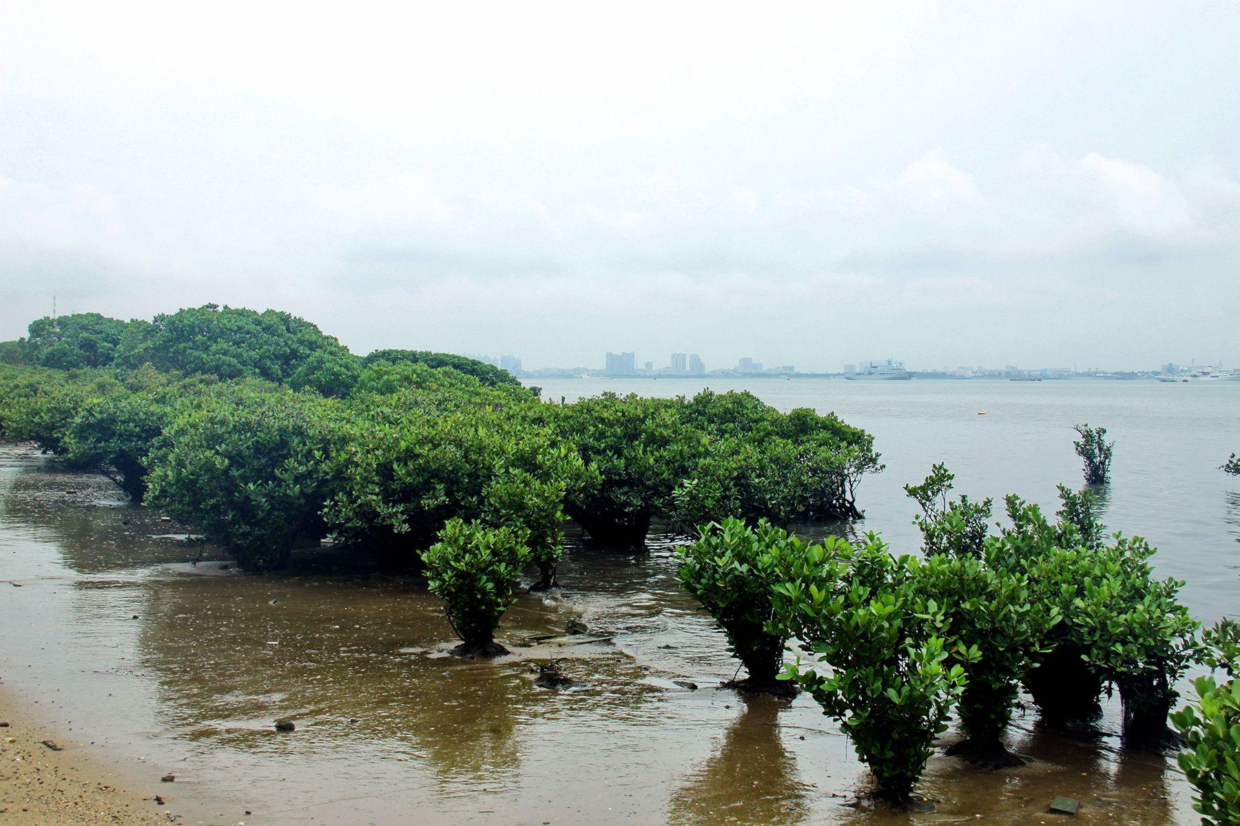 红树林 - 自然风景 - 数码摄影网论坛 - 摄影交流论坛