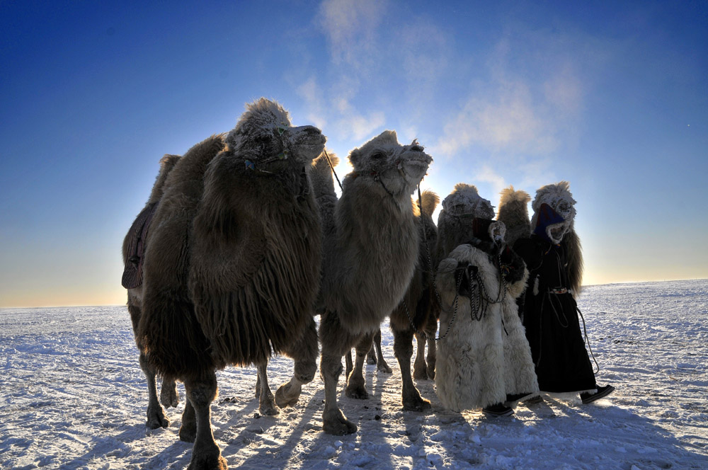 呼伦贝尔冰雪那达慕 冬季草原套马奔马 扎龙丹顶鹤 雪原东北虎摄影团  开始报名啦!