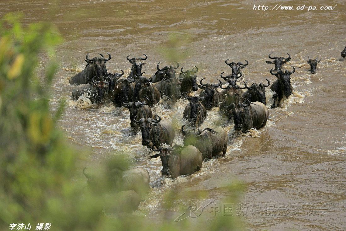2018年  坦桑尼亚角马产子高潮大观摄影团  开始报名了!