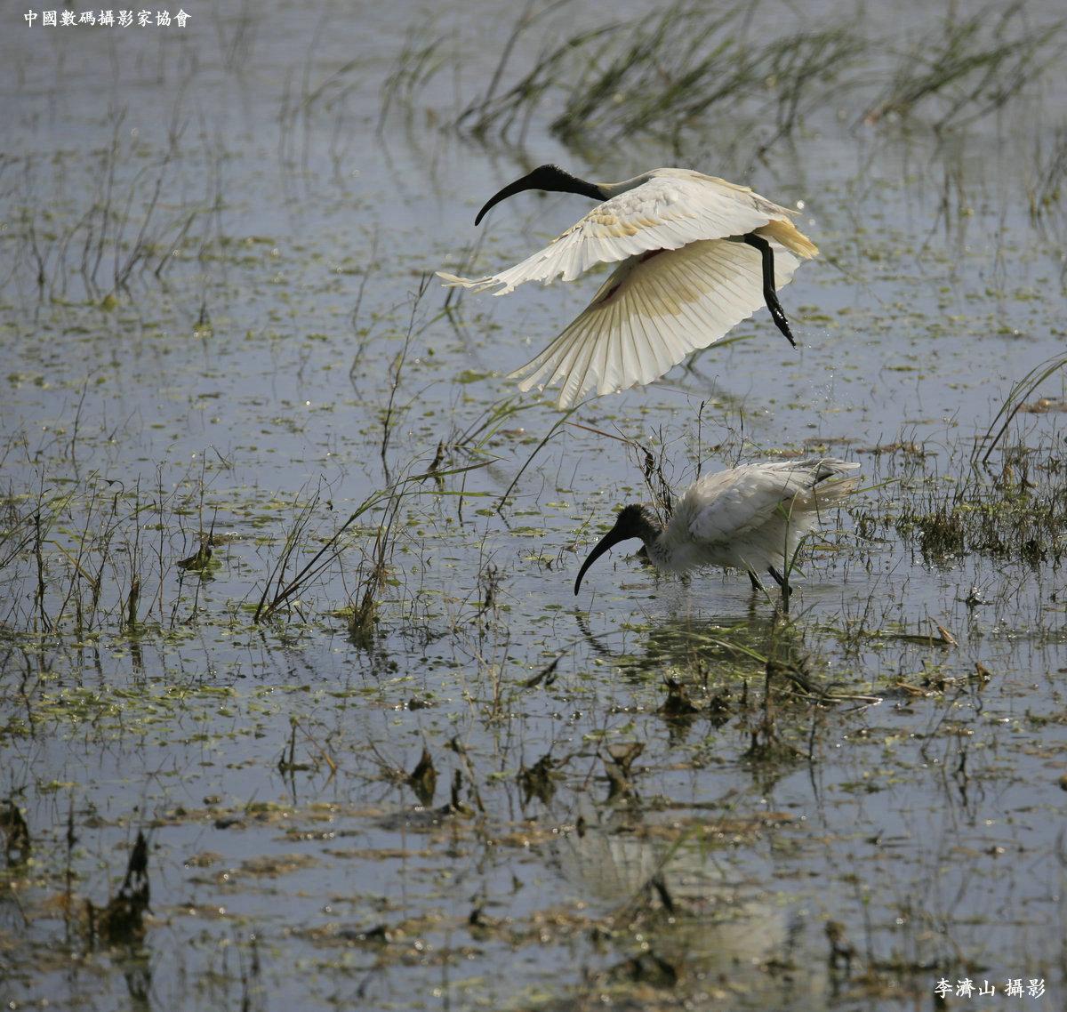 2018斯里兰卡深度鸟类摄影团
