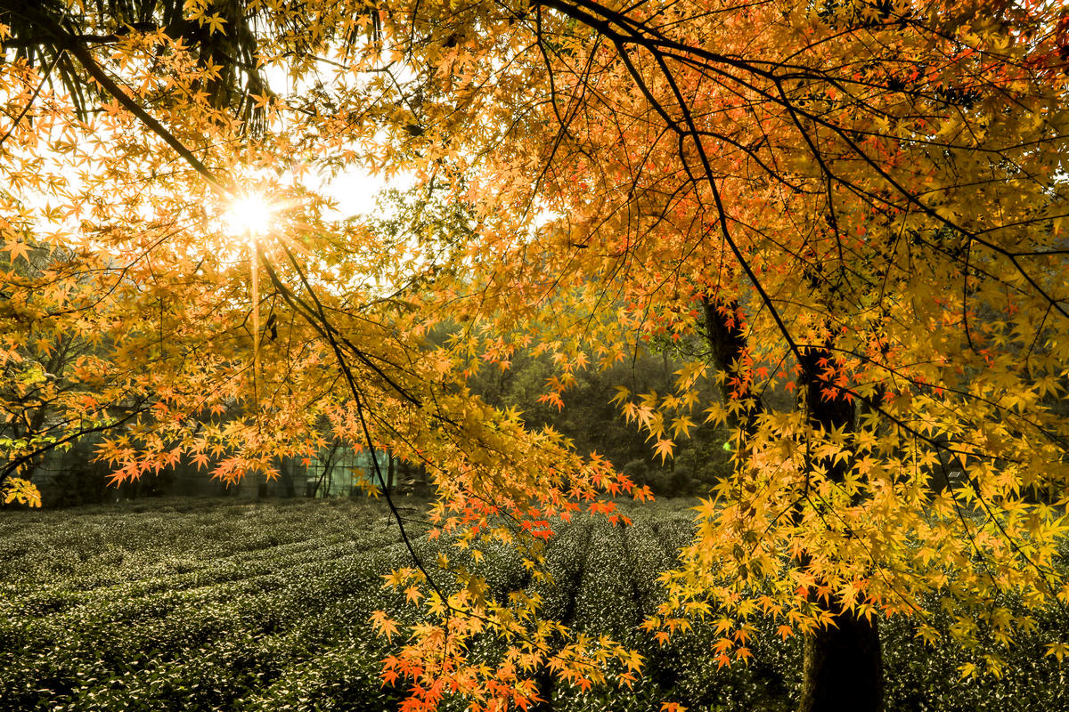 红叶,九溪最美