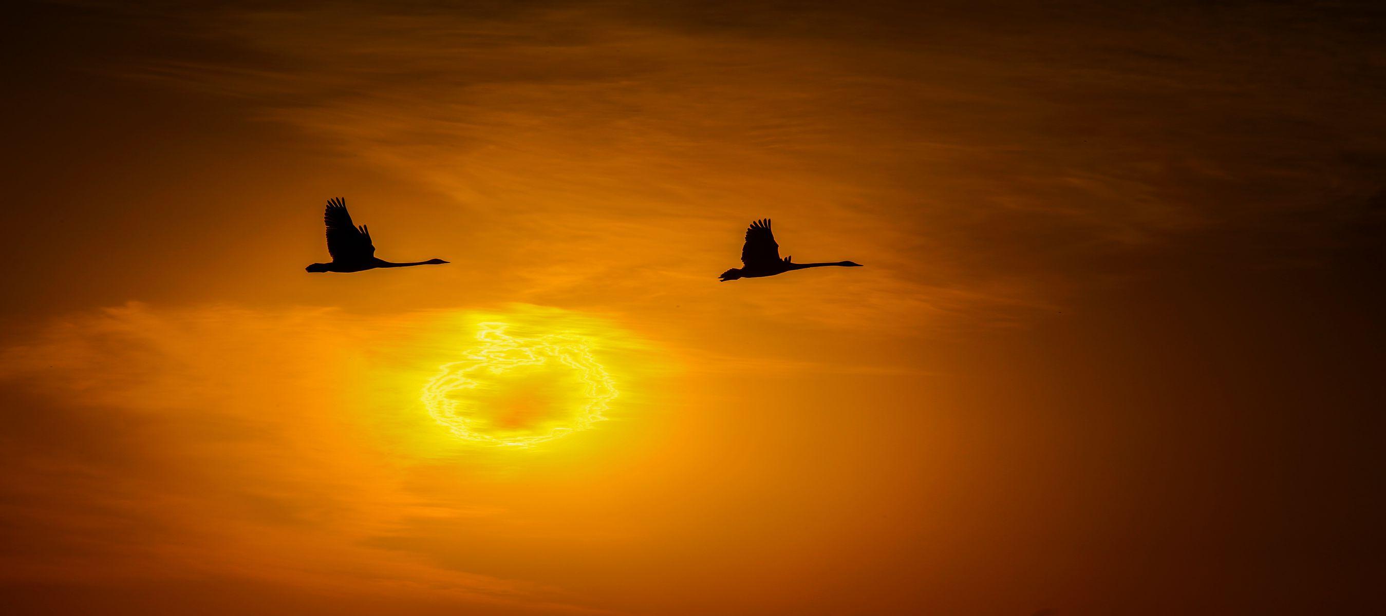 飞翔的天鹅