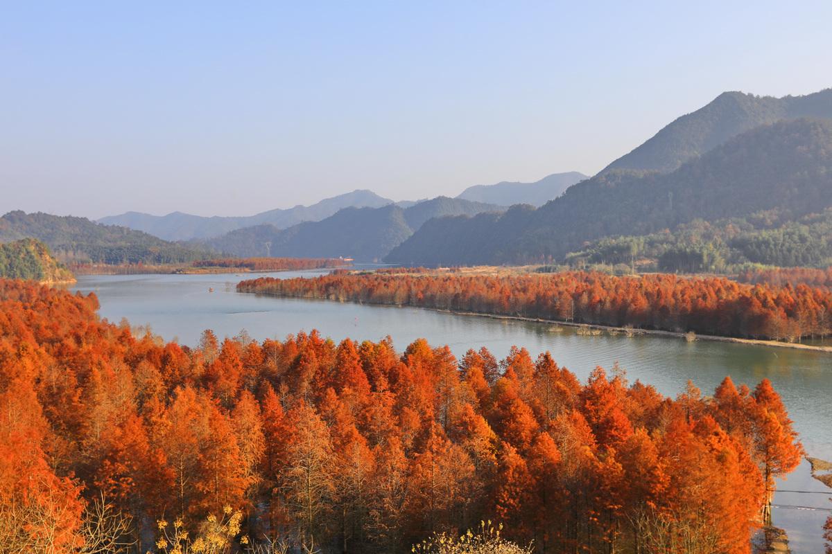 安徽方塘红杉林湿地