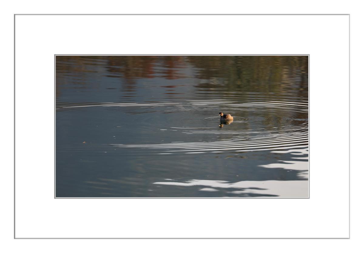 方塘河上小精灵