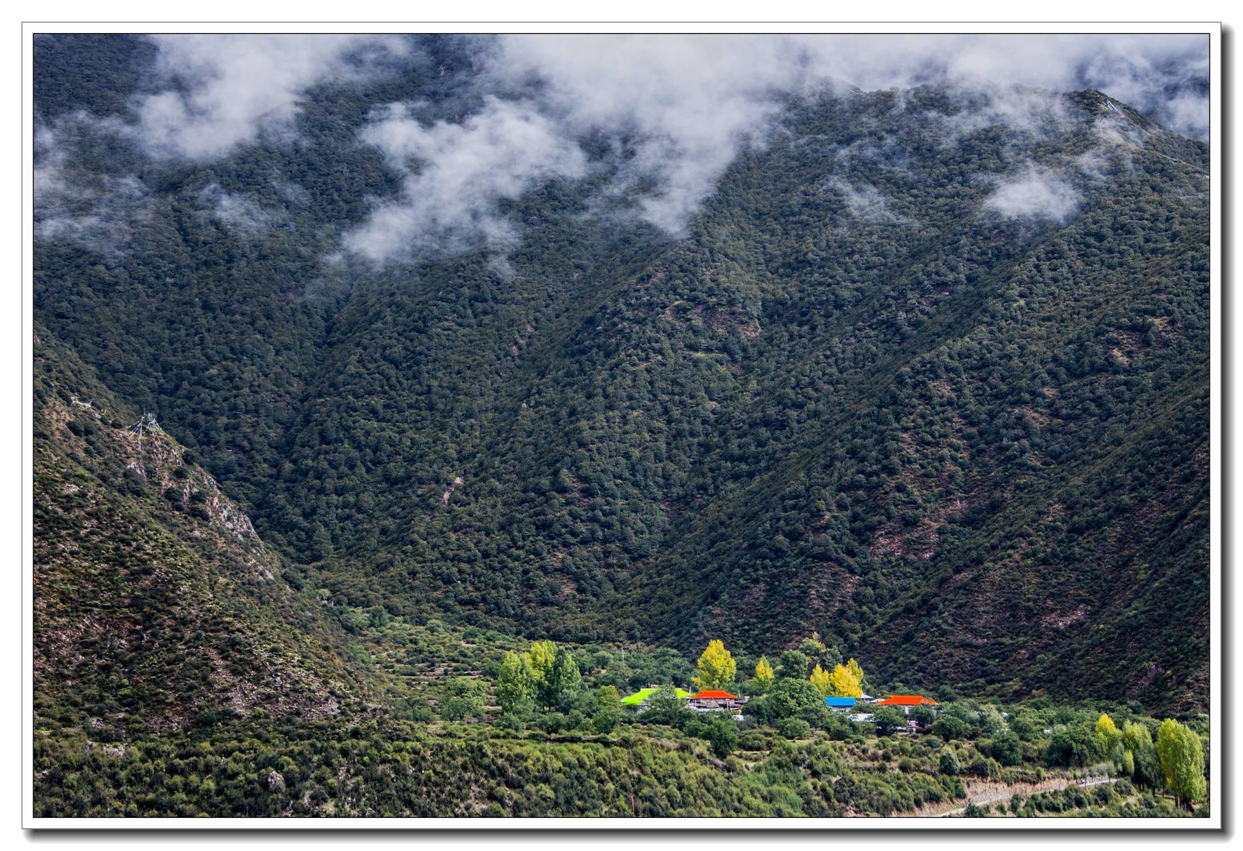 西藏林芝风光:《鲁朗林海入画游》
