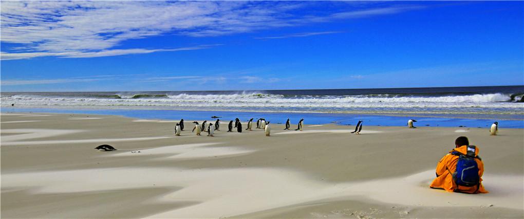 福克兰群岛-南乔治亚岛-南极半岛-穿越南极圈深度摄影团   开始报名啦!