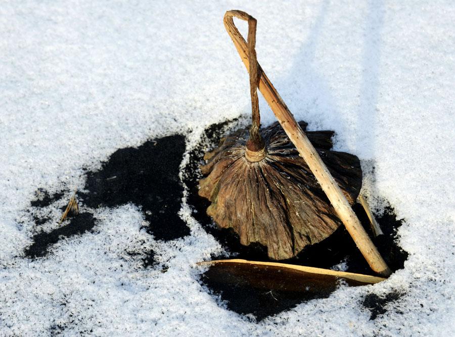 冰面上扭曲造型的冬日枯荷