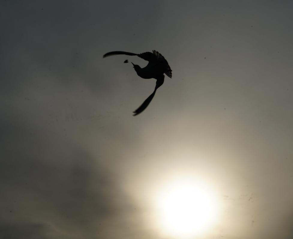海鸥高空表演