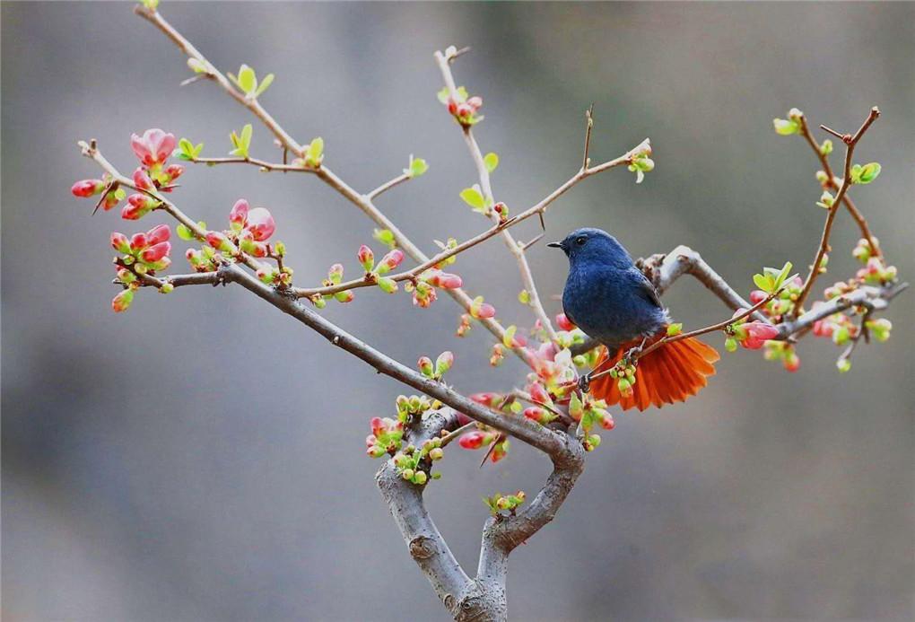 最美平顶山——泉水湾鸟类大汇演摄影团     开始报名啦!