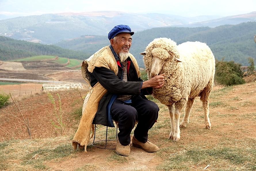 老人与羊...