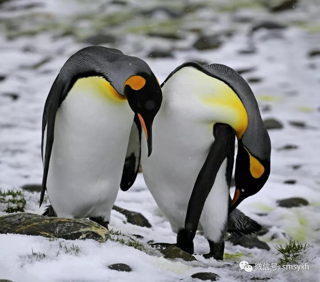 大南极+大南极三岛深度全景摄影团