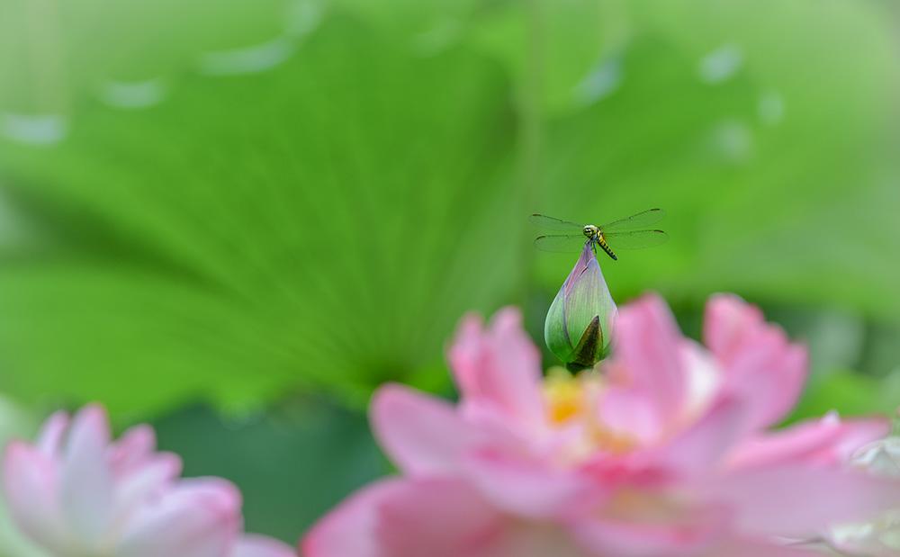 蜻蜓与鸟儿