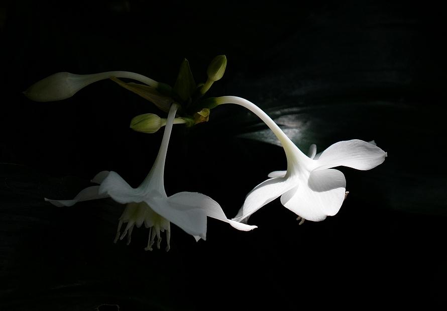 可爱的小花花...