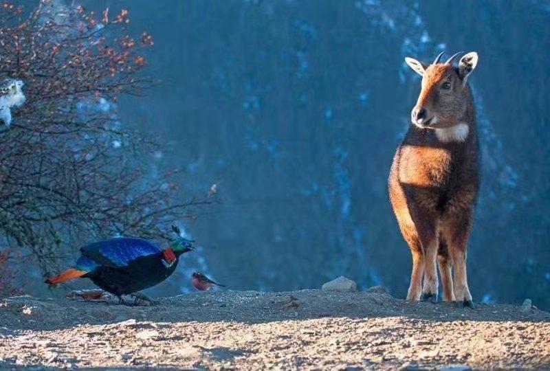 西藏藏东、藏北野生动物、鸟类生态摄影团,开始报名啦!