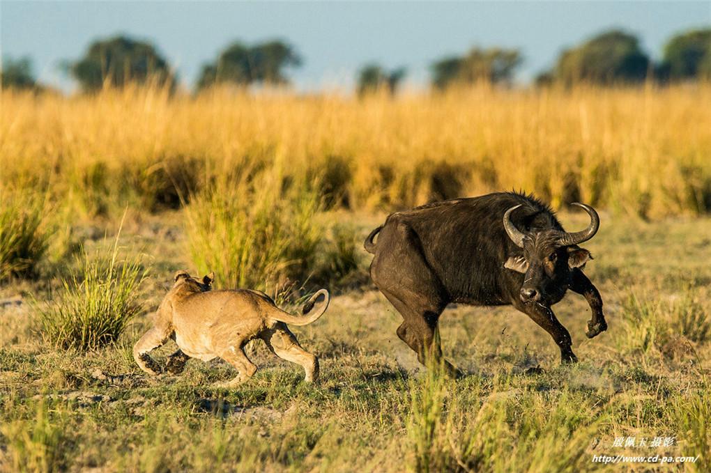 春节南非博茨瓦纳、津巴布韦、赞比亚三国深度摄影团