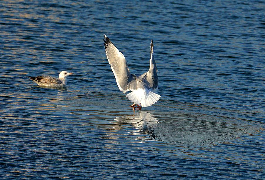 ——可 爱的海鸥2——