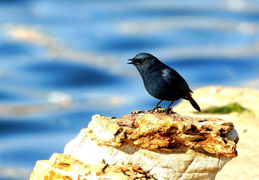 ——小鸟——