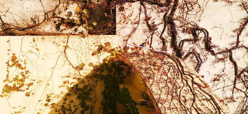冬日暖阳藤蔓墙