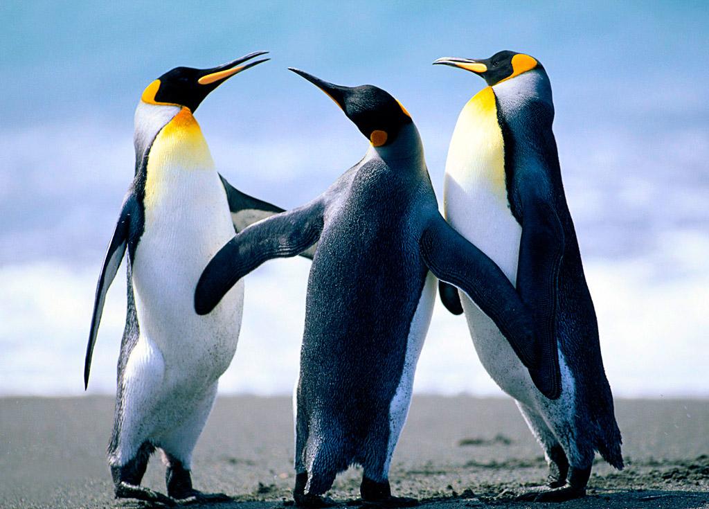 南美(百内国家公园+阿根廷+巴西)+南极三岛+伊瓜苏,开始报名了!