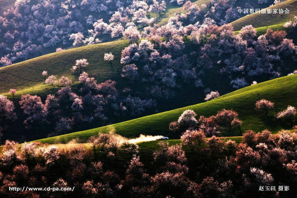 四月新疆,等一树杏花开,等一场春风来!