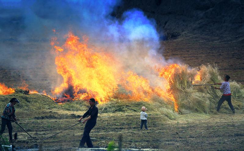 现实版的刀耕火种