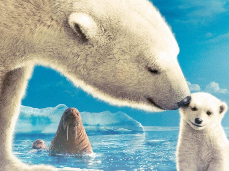 极地线路 | 深入北极腹地,在世界尽头寻觅冰川界域!开始报名了!