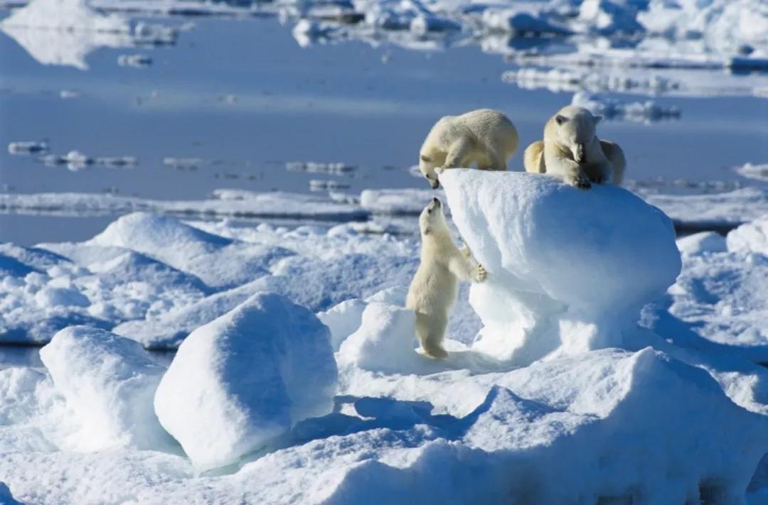 北极・斯瓦尔巴群岛,世界尽头的冷酷仙境!开始报名了!