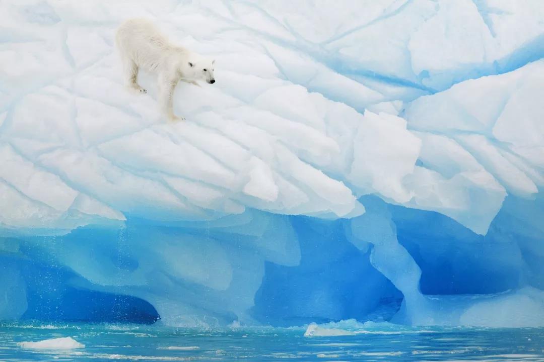 聆听极地呼唤,探索北极之心!开始报名了!