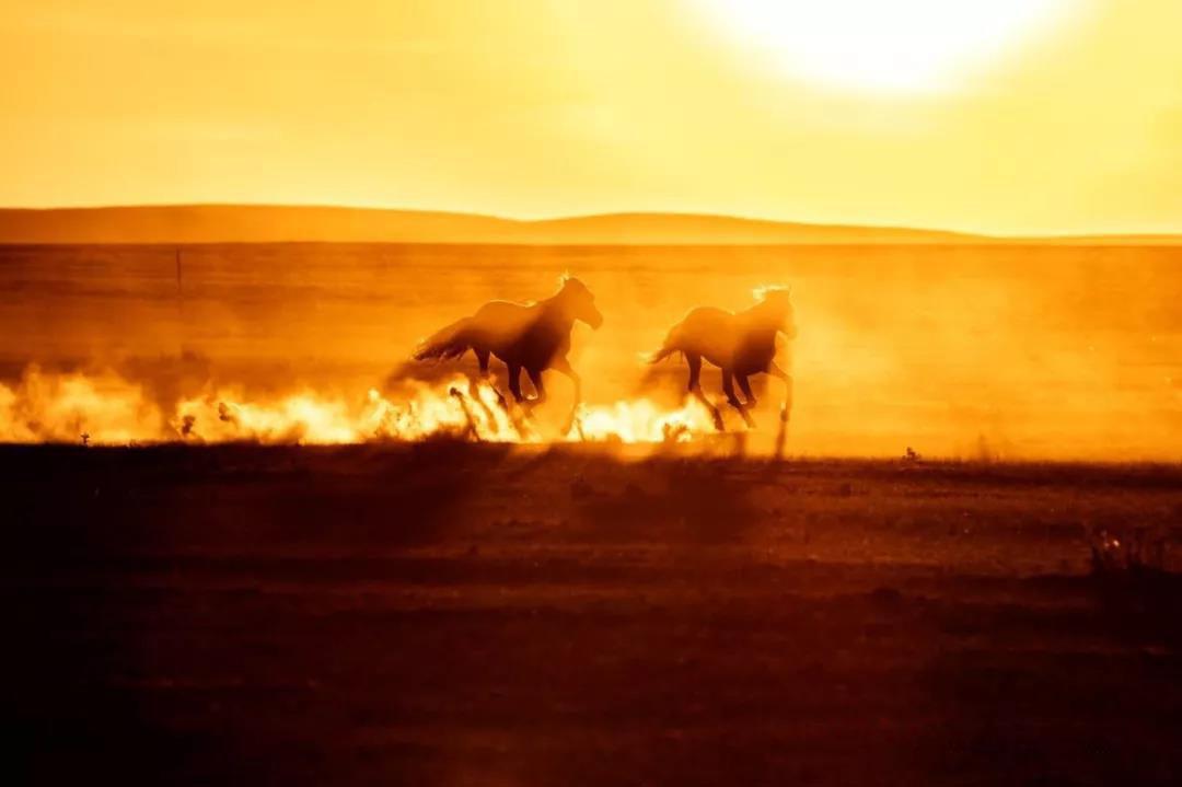 草原深处盛夏大型游牧文化摄影团!开始报名了!