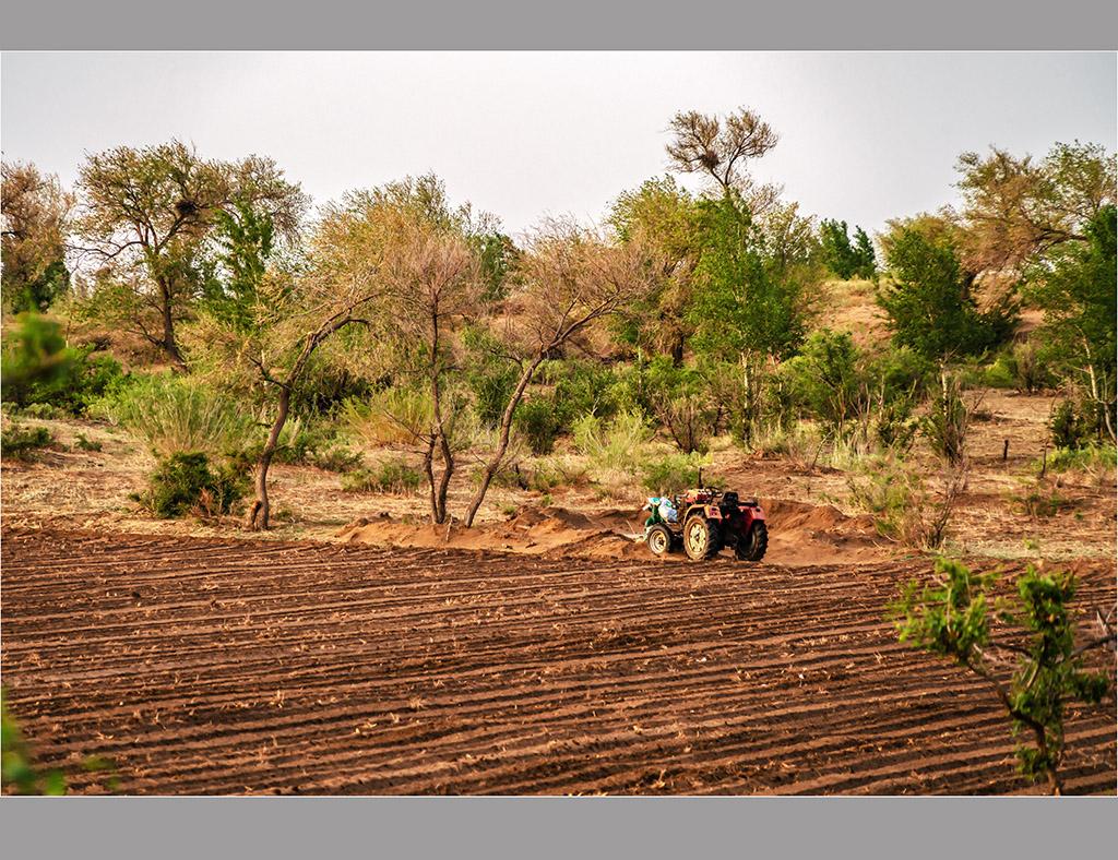 清晨奈曼旗大漠边缘小村外的榆树林