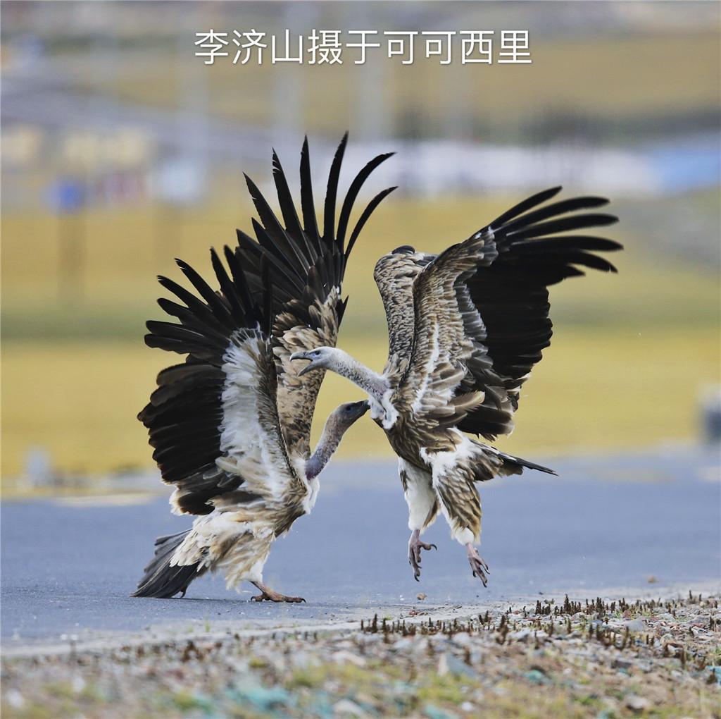 西藏秋冬季拍鸟摄影之旅