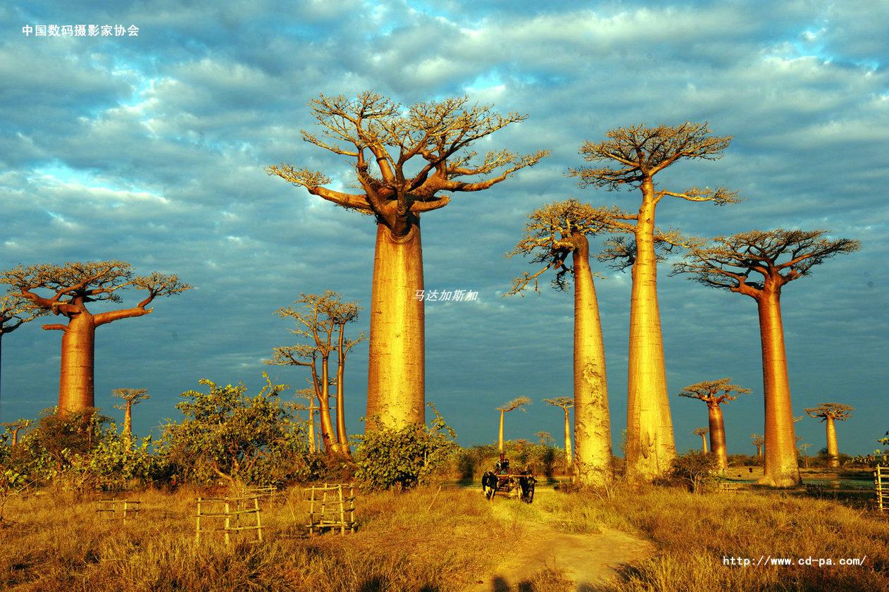 马达加斯加——世界尽头的万博体育app官方下载天堂,开始报名啦!