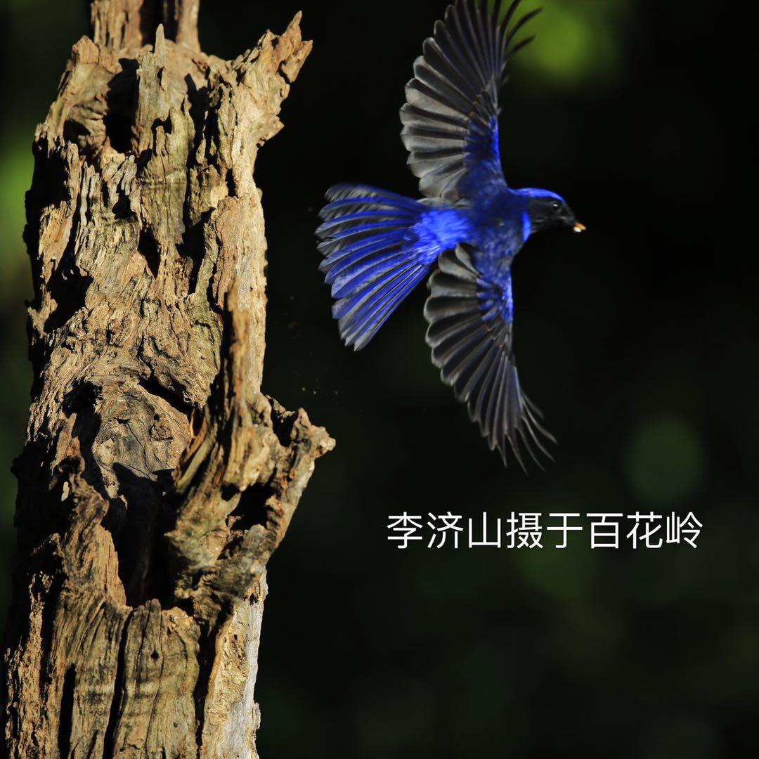 微信图片_201901221722316.jpg