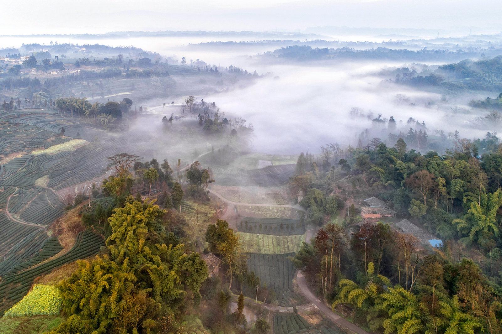 乡景朝雾里