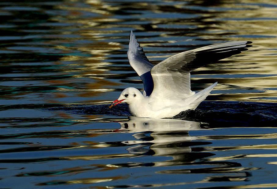 飛吧,小海鷗