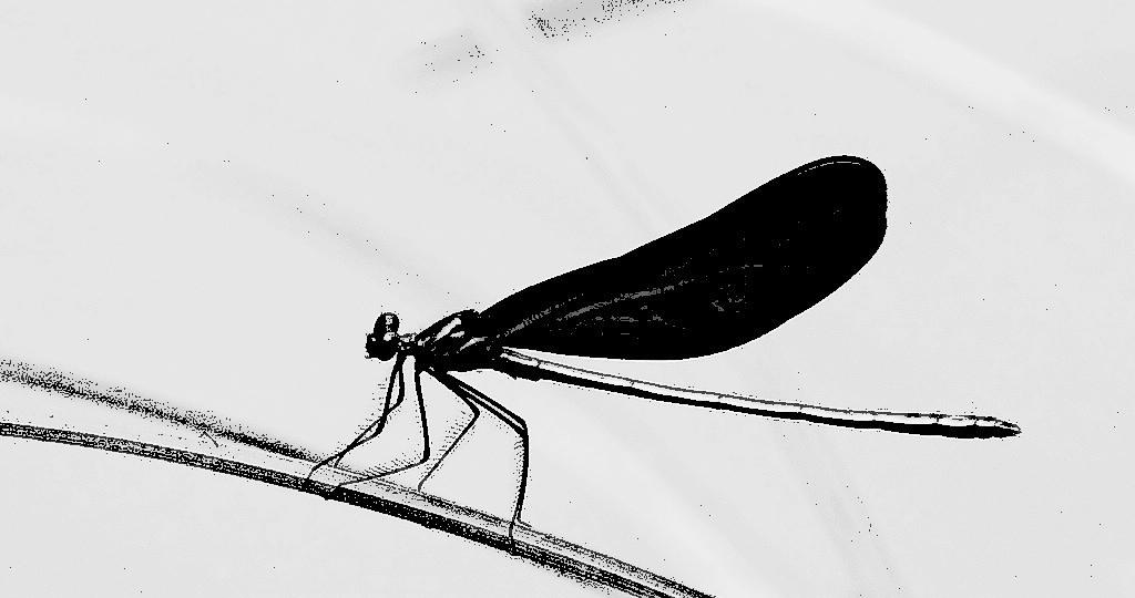 早有蜻蜓立上頭