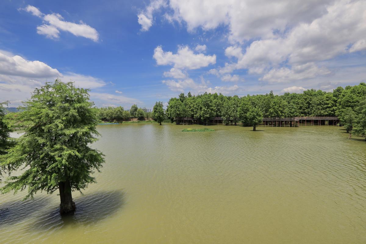 青山湖池杉湾