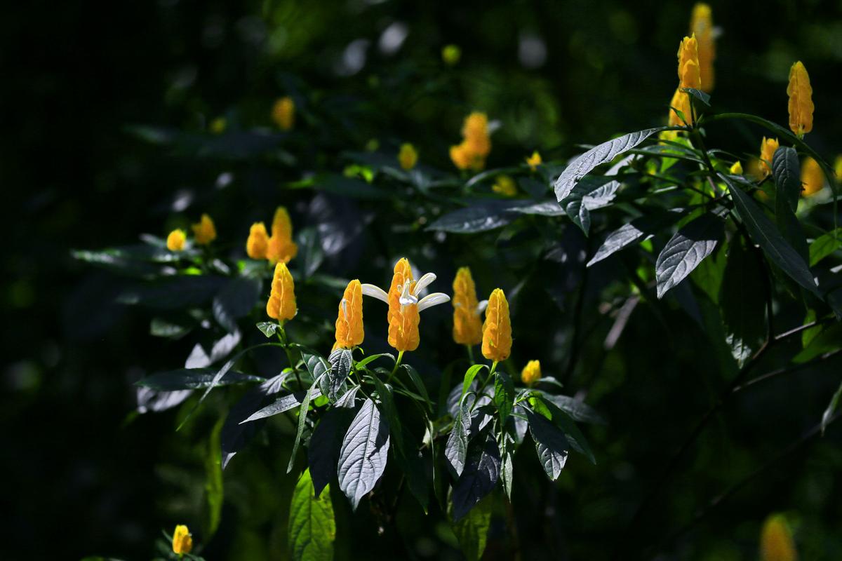 南美四国--巴西-热带植物园